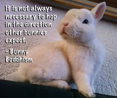 It is not always necessary to hop in the direction other bunnies expect. - Bunny Buddhism