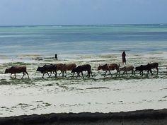 milky way crossing beach front