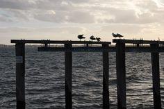 Birds at St Kilda