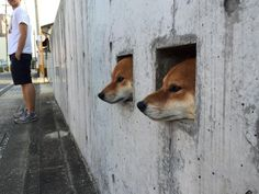 "akalark.jp — ykana: (via コウヨウさんのツイート: ""壁犬..."