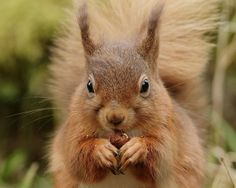 'Belinda' |                     Enjoying a hazelnut outside the kitchen window at Forest How.