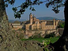 Urbino, province of Pesaro e Urbino , Marche region Italy