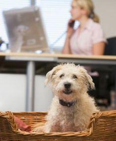 How pets enrich a person's life...help please!!?