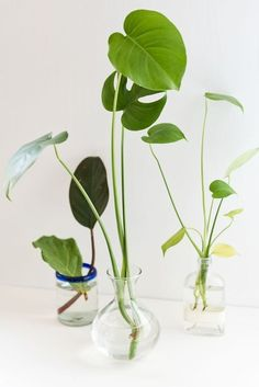One on Me: 3 Easy Steps to Plant Propagation How to propagate plants in three easy steps! Click through for all the details.How to propagate plants in three easy steps! Click through for all the details. Hanging Plants, Potted Plants, Indoor Plants, Hanging Gardens, Patio Plants, Diy Hanging, Shade Plants, Indoor Gardening, Ti Plant