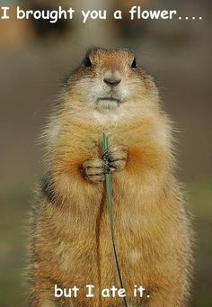 this just makes me wanna go squirrel shooting :)