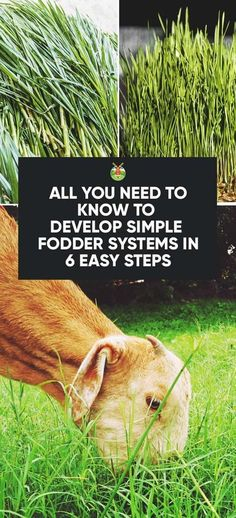 How to Develop Fodder Systems to Feed Your Animals Cheaply in 6 Steps