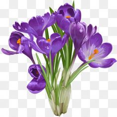 Bouquet of spring purple crocuses on the vine isolated on white background Bird Houses Painted, Mothers Day Crafts For Kids, Flower Clipart, Art N Craft, Flower Backgrounds, Cellphone Wallpaper, Design Tutorials, Design Templates, Handmade Flowers