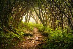 Mystischen Wald Fototapete selbst klebende Foto von ZestPhotography