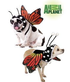 Animal Planet Butterfly Pet Costume at The Animal Rescue Site