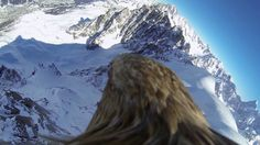Mont-Blanc viewed from the back of the largest European eagle Stay tuned for more eagle footage coming soon!! Please subscribe, share and check our other vid...