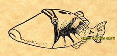 Humuhumunukunukuapuaa Trigger Reef Fish by ButterSideDownStamps