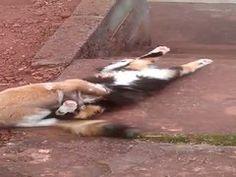 Cat & Rabbit. Animal love by Roger Marshall