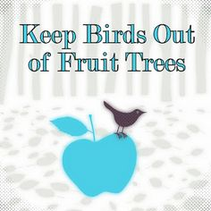 Natural Ways To Keep Birds Out Of Fruit Trees