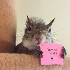 Baby Squirrel Orphaned In Hurricane Is Now Someone's Beloved Pet Cute Squirrel, Baby Squirrel, Squirrels, Cute Baby Animals, Animals And Pets, Funny Animals, Wild Animals, Funny Squirrel Pictures, Mundo Animal
