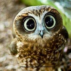 Big eyes!!