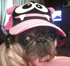 The sporty pug doesn't want to miss having this chapeau in his wardrobe.