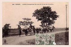 Wheelbarrow was widely use especially in the farmland Old Vietnam Tonkinese, Vietnam History, Hanoi Vietnam, Old Postcards, Wheelbarrow, Old Photos, Painting, Tonkinese Cat, Antique Photos