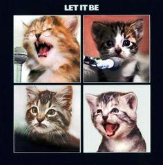 Capas de discos, gatinhos e a predileção feminina pelo humor | Portal Homem