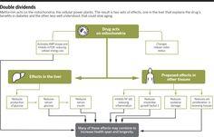 Posibles rutas moleculares que explicarían el efecto sobre la salud de la metformina