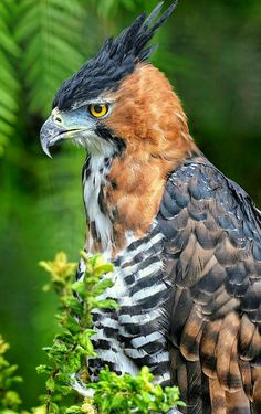 Good Photos birds of prey feathers Style. - Good Photos birds of prey feathers Style Being a wildlife of victim shooter, th… – Pet care is - Pretty Birds, Beautiful Birds, Animals Beautiful, Cute Animals, Exotic Birds, Colorful Birds, Exotic Animals, Exotic Pets, Wild Life