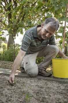 Die Ernte ist im August bereits in vollem Gange. Gleichzeitig kann man die Gemüsebeet für eine späte Aussaat vorbereiten. Wir verraten Ihnen, worauf Sie achten müssen und welches Gemüse sich für eine späte Aussaat eignet.