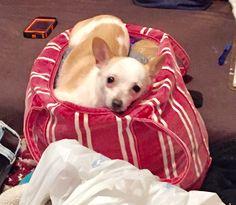 Cindy Lou, Dogs, Animals, Animales, Animaux, Pet Dogs, Doggies, Animal, Dog
