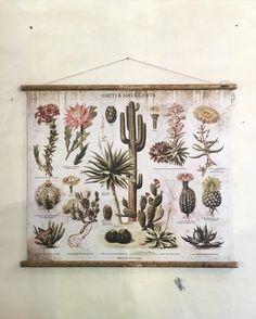 Cactus love @hallescheshaus . . . #cactus #cactuslover #welovecacti #cactusmagazine #old #map #berlin #hallescheshaus
