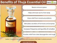 The health benefits of Thuja Essential Oil can be attributed to its properties like anti rheumatic, astringent, diuretic, emenagogue, expectorant, insect repellent, rubefacient, stimulant, tonic and vermifuge. Thuja is well known and is very popular as a decorative plant. This does not mean that it is in any way less popular in the world of medicines. Thuja has a significant place in herbal and Homeopathic systems of medicine.