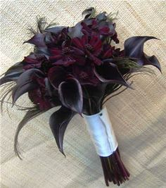 Black Calla Lilly- Has Anyone Used them? : wedding bouquet calla lily ceremony flowers Peacock Feathers And Calla Lilies Bouquet Noir, Black Bouquet, Feather Bouquet, Calla Lily Bouquet, Lis Calla Violet, Black Calla Lily, Purple Calla Lilies, Purple Bouquets, Flower Bouquets