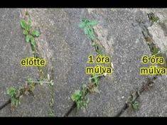 13 házi gyomirtó, ami a gyökerektől pucolja ki a kertedben lévő gyomokat!
