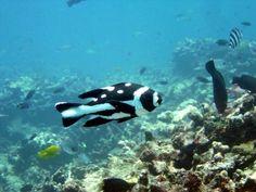 Snorkelling / Diving