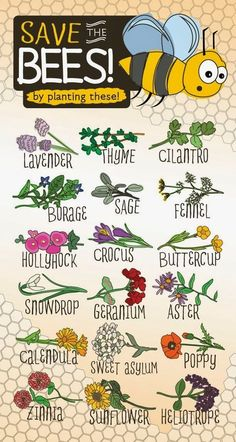 To Save Bees, Plant These – Infographic. click here: http://marclanders.com/save-bees-plant-infographic/