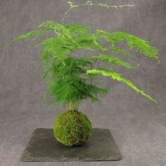 Japonská Kokedama  - nový styl v pěstování rostlin