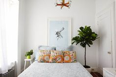 What to know about the fiddle-leaf fig tree - TODAY.com