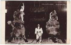 Circus act with elephants  Antique german real photo postcard
