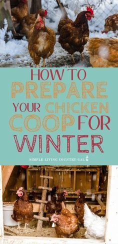 Chicken Coop Winter, Easy Chicken Coop, Diy Chicken Coop Plans, Backyard Chicken Coops, Chicken Feed, Moveable Chicken Coop, Chicken Lady, Raising Backyard Chickens, Keeping Chickens