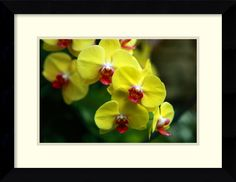 Yellow Orchid by Andy Magee Framed Photographic Print