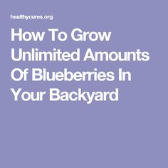 How To Grow Unlimited Amounts Of Blueberries In Your Backyard