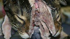Pétition · que la société Aquafresh (GlaxoSmithKline) 800-897-7535 www.aquafresh.com/ stop la vente de produits issue de l'expérimentation animal !! · Change.org