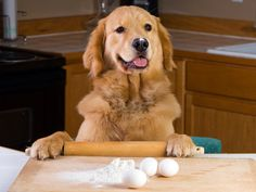 Seven tips on how to make pet food and save money | petMD