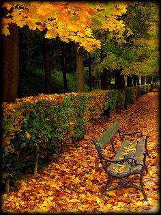 Golden & Changing Leaves on Bench - Vienna, Austria