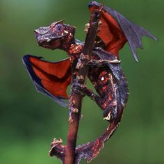 Dragons do exist!