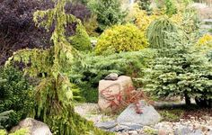 Water Garden, Flower Beds, Stepping Stones, Golf Courses, Yard, Outdoor Decor, Home Decor, Rock, Google