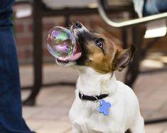Des photos prises au bon moment et au bon endroit ! Photo dog & bubble
