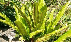 Plant Leaves, Plant