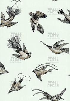 Cole ans Son - Tropical Birds 11107