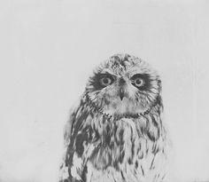 Owl Photography  Nature Owl Print Minimalistic Decor by Kristybee