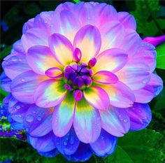 The dahila flower is so bright that it almost glows.. SO BEAUTIFUL love the colors!