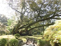 奈良 萬葉植物園 2015.04.24