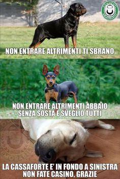Cani di grossa taglia, cani di piccola taglia - #cani #grossa #piccola #taglia Funny Video Memes, Funny Jokes, Hilarious, Large Dogs, Small Dogs, Funny Images, Funny Photos, One Liner Jokes, Funny Animals